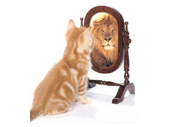 Мухи от котлет или чем отличается самооценка от уверенности в себе?