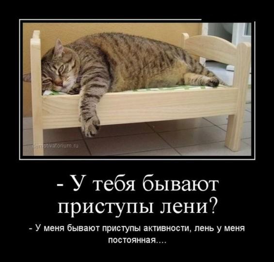 Анекдоты для лентяй