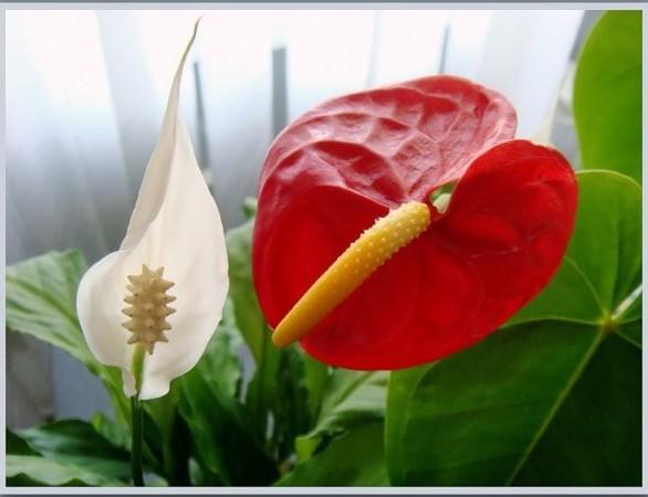 Цветы мужское и женское счастье