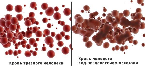 Картинки по запросу алкоголь и эритроциты