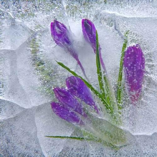 Замороженная жизнь