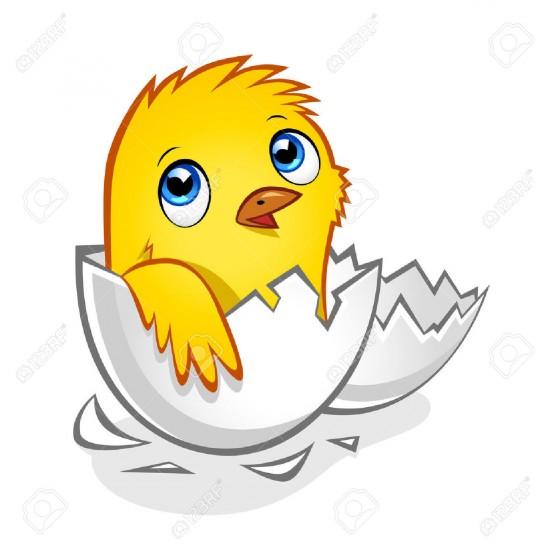 Рисунок вылупившегося цыпленка