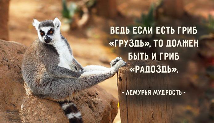http://www.b17.ru/foto/uploaded/upl_1495130347_27409.jpg