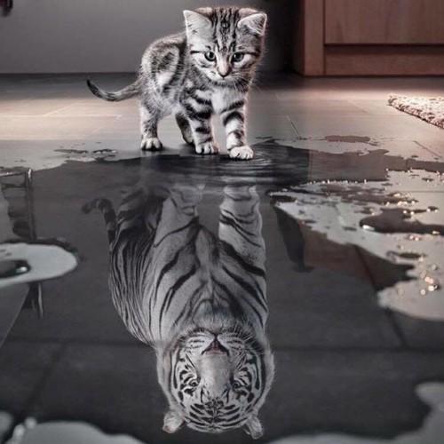 Дети-изгои. Одинокий тигр.