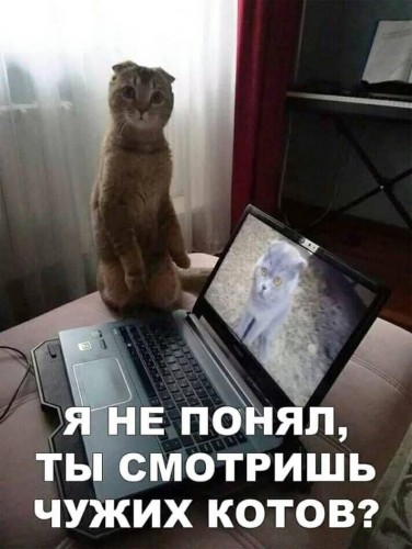 39108276_1_a4ffcd.jpg