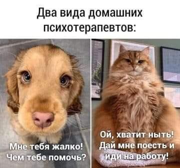 46696006_1_812548.jpg