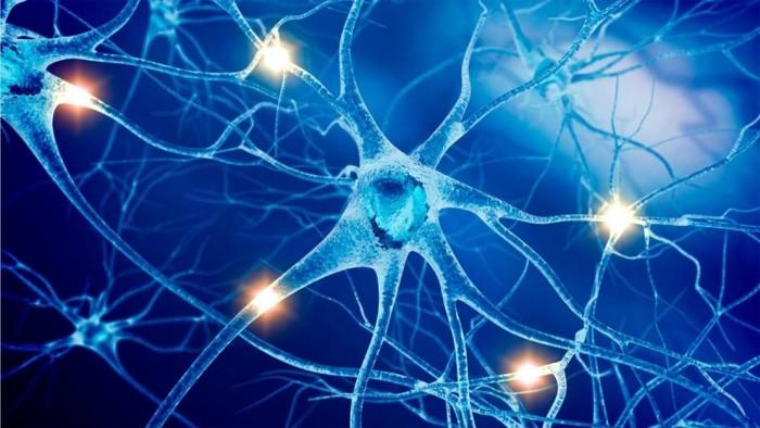Мифы о нервной системе. Част 1. (2)