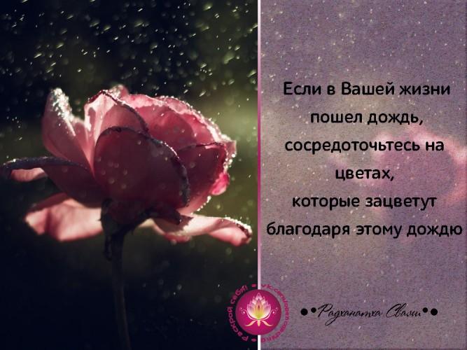 Если в вашей жизни пошел дождь, сосредоточьтесь на цветах, которые зацветут благодаря нему