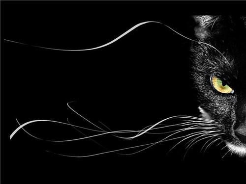 Символика цвета черного