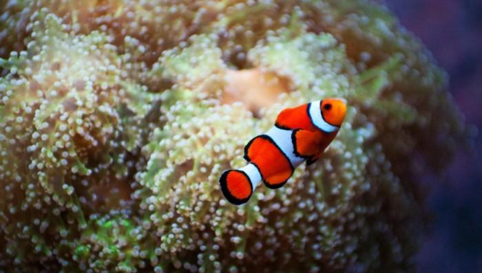Ускользающая рыбка Про ясность в отношениях
