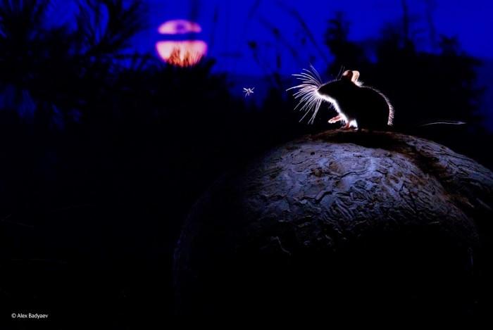 Любовь мышки и звезды зависимость от яркого талантливого партнера