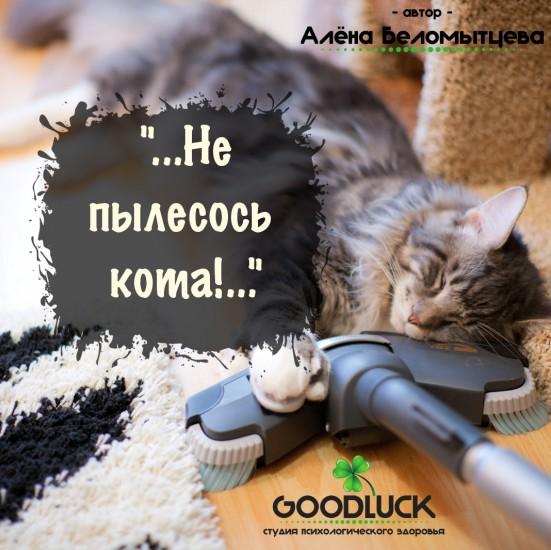 Не пылесось кота