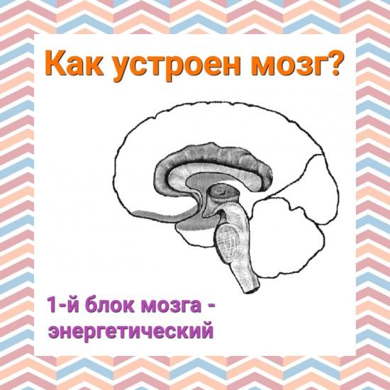 Структурно функциональную девушка модель работы мозга по а р лурия работа для девушек в сфере эскорт