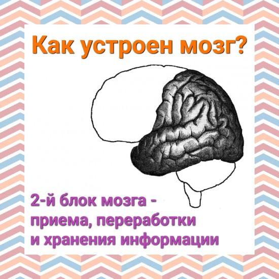 Структурно функциональная девушка модель работы мозга по а р лурия работа вахтой в москву девушка