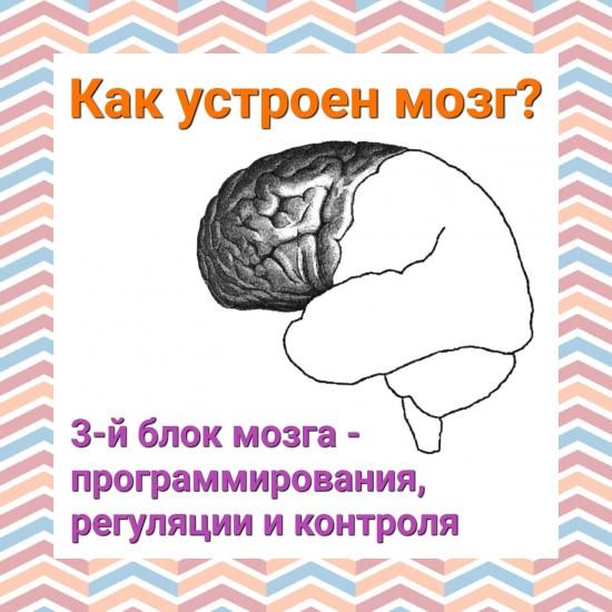 структурно функциональная девушка модель работы мозга по а р лурия
