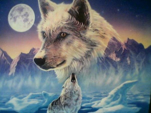 Секс и одинокий волк