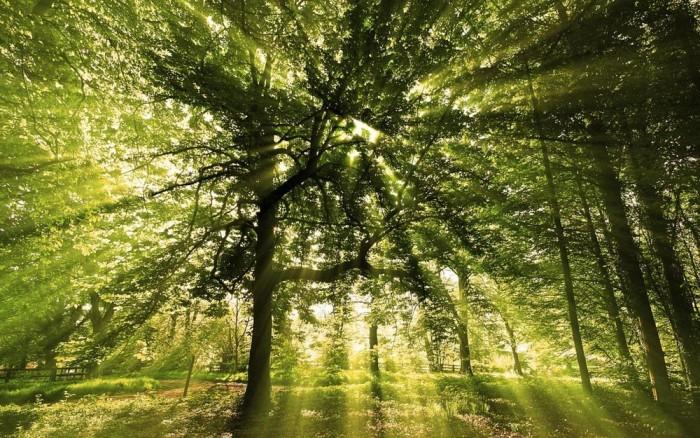 Полезная психологическая методика Исцеление и релакс Согласованность гармония целостность