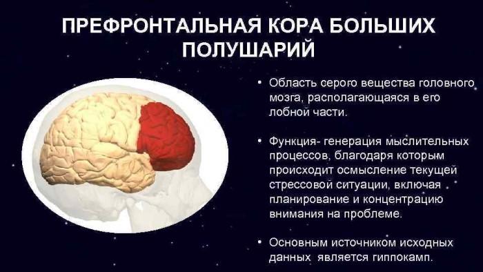 Как перестроить свой мозг или почему вы не меняетесь