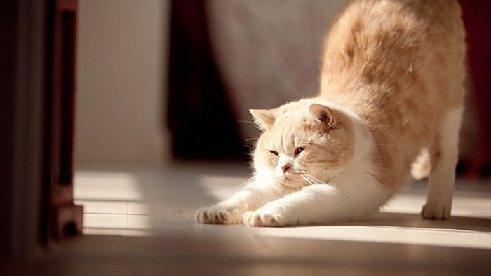 Картинки котята потягиваются