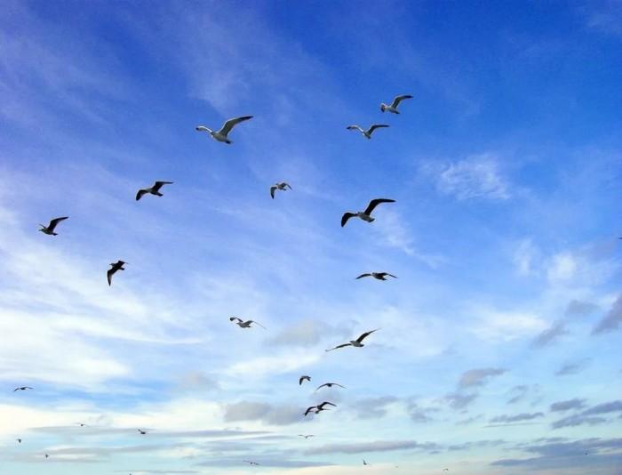 картинки с летящими птицами красивые осетин