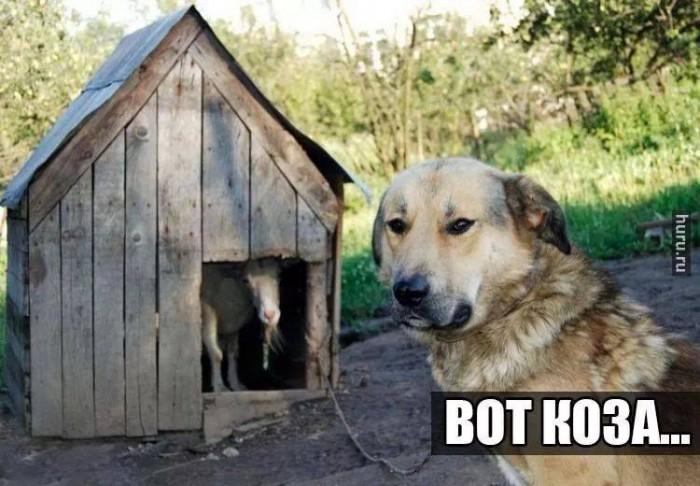 Картинка собаки с надписью теперь перезимуем а теплых будках, самая
