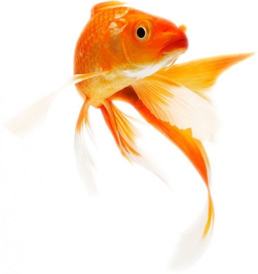 Волшебные свидетельства поля Золотая рыбка или знаки Судьбы Невероятное рядом
