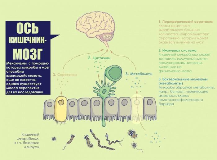 Лечение аутизма Поведенческая терапия или пересадка микробиоты
