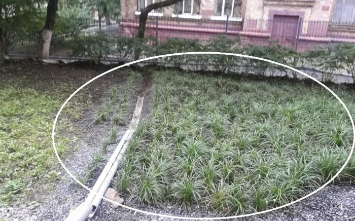 Феномен растет как трава в психотерапии