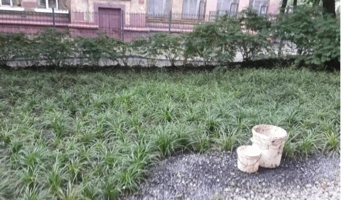 """Феномен """"растет как трава"""" в психотерапии (2)"""