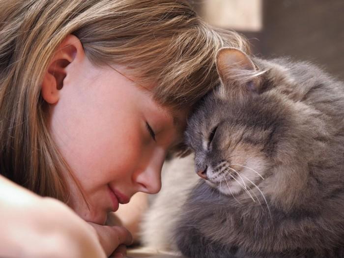 Кошка. Опыт безусловной любви (4)