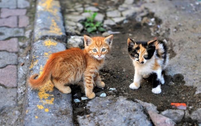 Кот нку помочь и нагадить ближнему