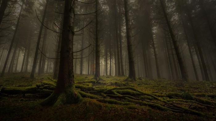 Одиночество - это наказание или возможность? (5)