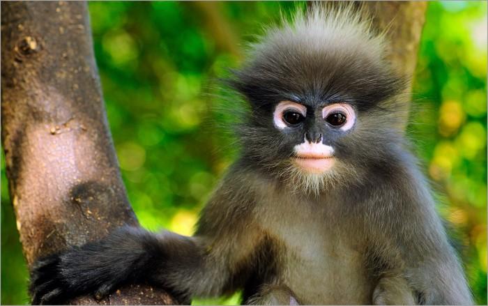 Наша дорогая обезьяна