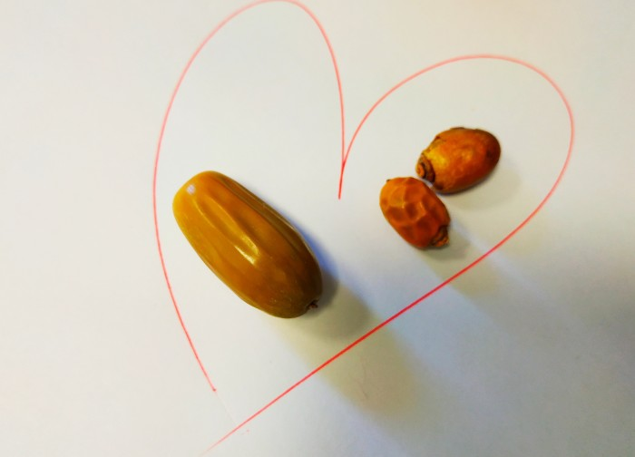 Пальма желудь и любовь к себе