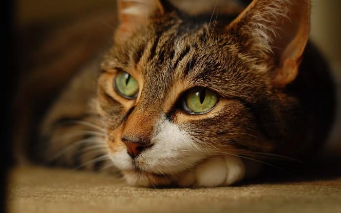 Особакивание кота отвергающий партнер и заслуживание Любви