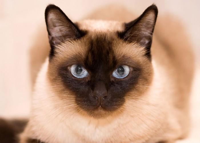 Личные границы или кошка которая гуляет сама по себе
