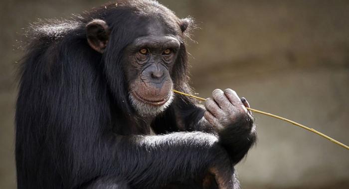 Поведенческие мутации эволюция поведения и социальные инстинкты у животных