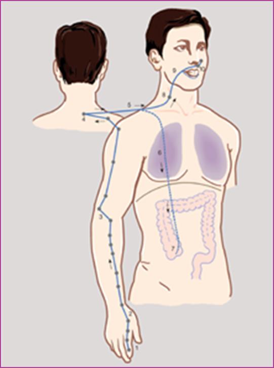 Психосоматика болезней дыхания