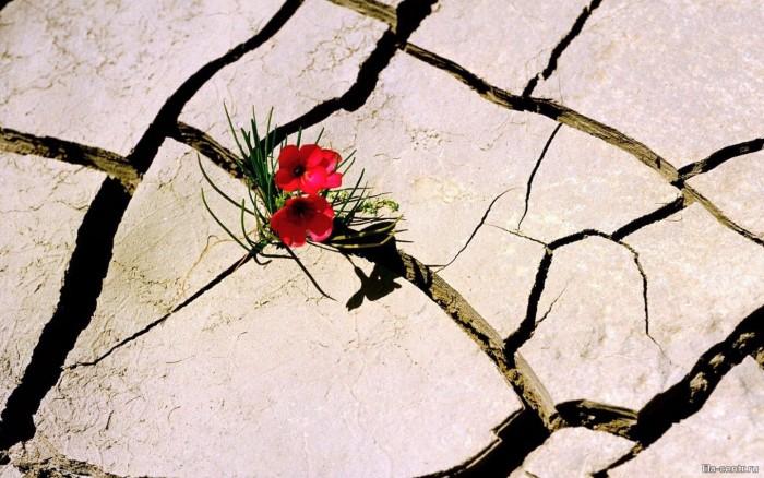 Козел отпущения - несчастная жертва для вечных страданий или избранная мессия, искупающая грехи всего человечества