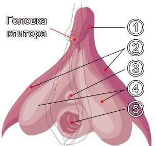 Не вагиналный оргазм