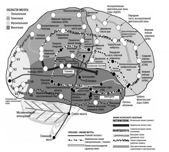 Как работает мозг человека (краткий ликбез)