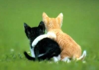 Взаимопонимание, как важнейший аспект отношений. (2)