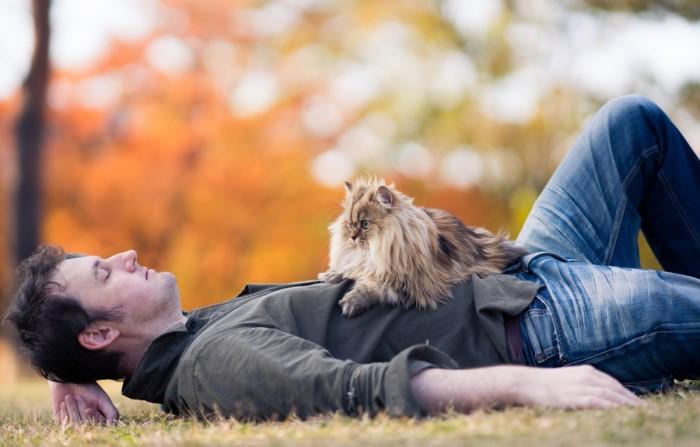 Кризис средних лет у мужчины и кот вместо психолога. Почему бы и нет? (4)
