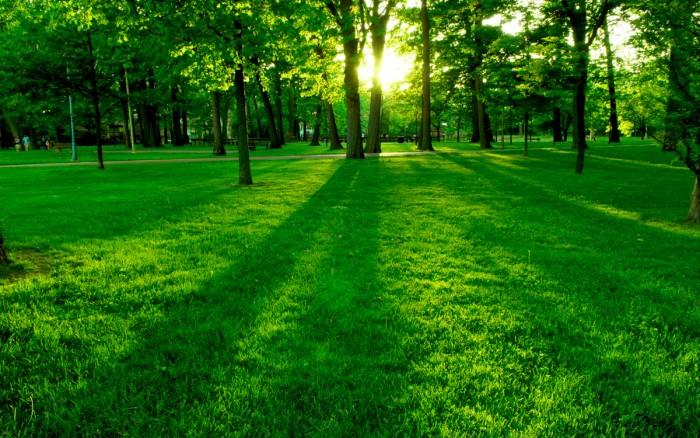 Вам нравится зеленый цвет Что это значит