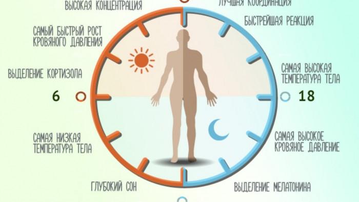 Как нормализовать биологические часы со сменой дня и ночи циркадные ритмы